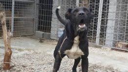 سگ سرابی آدمگیر