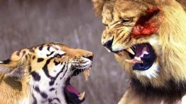 مستند حملات سریع حیوانات مرگبار