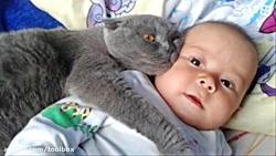 این گربه ها از سگها چیزی کم ندارند