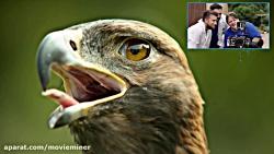 تصاویر سوپر اسلوموشن از پرندگان