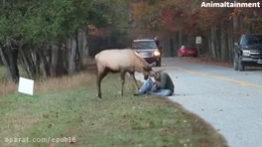 حمله حیوانات وحشی ,حمله حیوانات