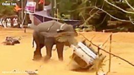 حمله وحشیانه فیل و کرگدن و سایر حیوانات به انسان