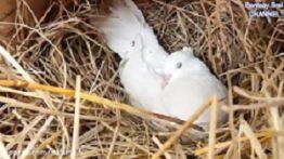 فیلم نجات پرنده ها از چنگال مار