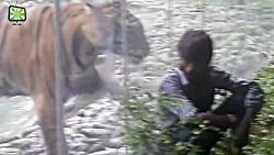 واکنش خنده دار انسان ها به حمله حیوانات باغ وحش از پشت شیشه