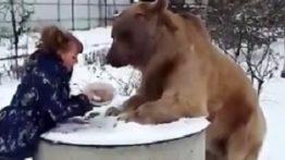 Wildlife Bears documentary