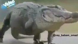 دوبله تمساح خنده دار