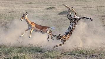 شکارهای ناموفق حیوانات