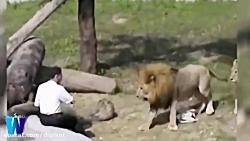 فیلم سوپر ترسناک از 10 تا از وحشتناک ترین حمله حیوانات به انسان