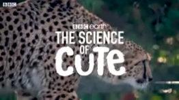کلیپ دیدنی از حیات وحش