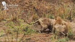 Attractive wildlife documentary
