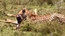 جنگ حیوانات