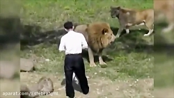 حملات ناگهانی حیوانات به انسان