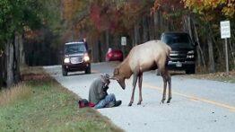 حمله حیوانات وحشی گوزن یک انسان بی خانمان را می کشد