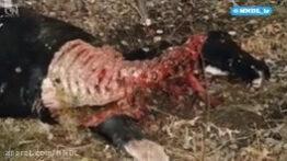 حیوانی مرموز و وحشی و خون خوار
