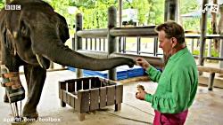 خوشحالی یک فیل از پای مصنوعیش