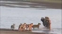 ده نبرد خونین حیوانات در حیات وحش