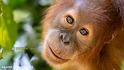 کمیاب ترین حیوانات جهان