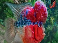 جدیدترین وعجیب ترین گونه ماهی فلاور