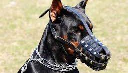 جنگ بین سگ های دو متری وحشی