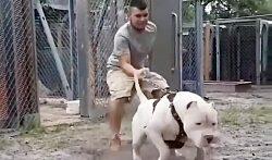 جنگ و نبرد سگ هاسکی با سگ پیتبول در خیابان !