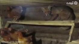 حمله حیوانات به خانه انسان ها