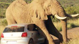 حمله حیوانات به ماشین ها در حیات کلیپ های حیوانات