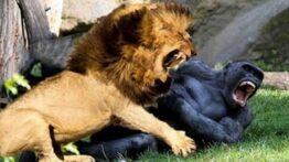 شکار شگفت انگیز حیوانات وحشی در حیات وحش