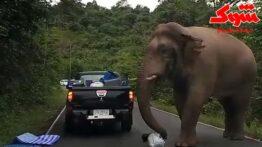فیل غول پیکر همه جا را خراب کرد