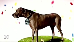 قوی ترین و باهوش ترین سگ های جهان