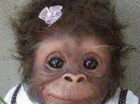 میمون های کوچولو و بامزه