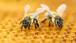 چگونه زنبورهای عسل در زمستان کندو را گرم نگه می دارند؟