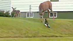 صحنه های درگیری حیوانات وحشی و خطرناک