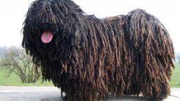 عجیب ترین سگ ها در دنیا