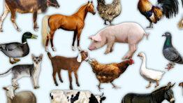مستند حیوانات – لحظاتی شگفت انگیز از حیونات و شبیه سازی آنها – جفتگیری