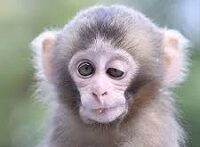 میمون کرونایی بی چاره داره جون میده