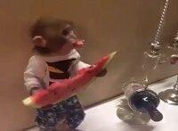 هندوانه خوردن بچه میمون