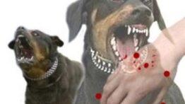 چالش بین سگ و گربه های وحشی