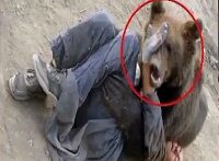 کلیپ حمله حیوانات عجیب به انسان ها