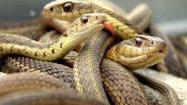 14 مبارزه خشن بین حیوانات وحشی – مارهای مرگبار