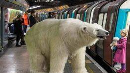 حمله خرس قطبی به زنی در باغ وحش