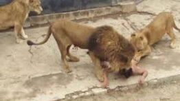 شکار صحنه ای نادر از حیات وحش (حتما تماشا کنید)