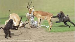 20 تا از هیجان انگیزترین جنگ های حیوانات در حیات وحش