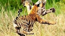 جنگ-و-جدال-نفس-گیر-و-خونین-حیوانات-وحشی-برای-بقاء