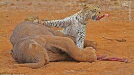 جنگ و نبرد حیوانات وحشی