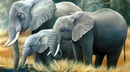 فیل قدرتمند ترین مادر بین حیوانات جهان دبدنی