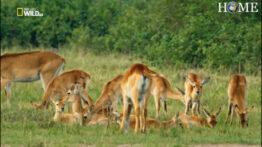 مستند حیوانات حیات وحش اوگاندا