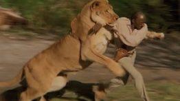 بهترین حمله حیوانات نبینی ضرر کردی
