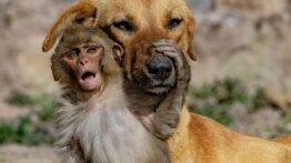 دوستی بچه میمون بامزه وسگها