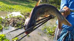 شکار ماهی