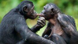۱۵ غیر عادی عجیب و غریب جفت گیری در حیوانات